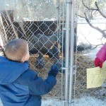 Brandon surveys the chickens - Kids welcome