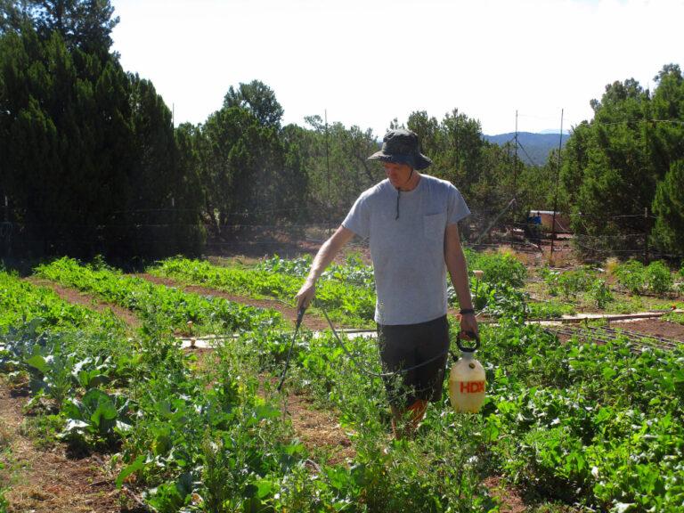 Connor-applying-botanical-pest-deterrent-Aug-2020-1